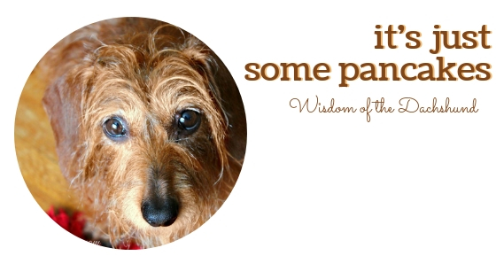 It's Just Some Pancakes Wisdom of the Dachshund